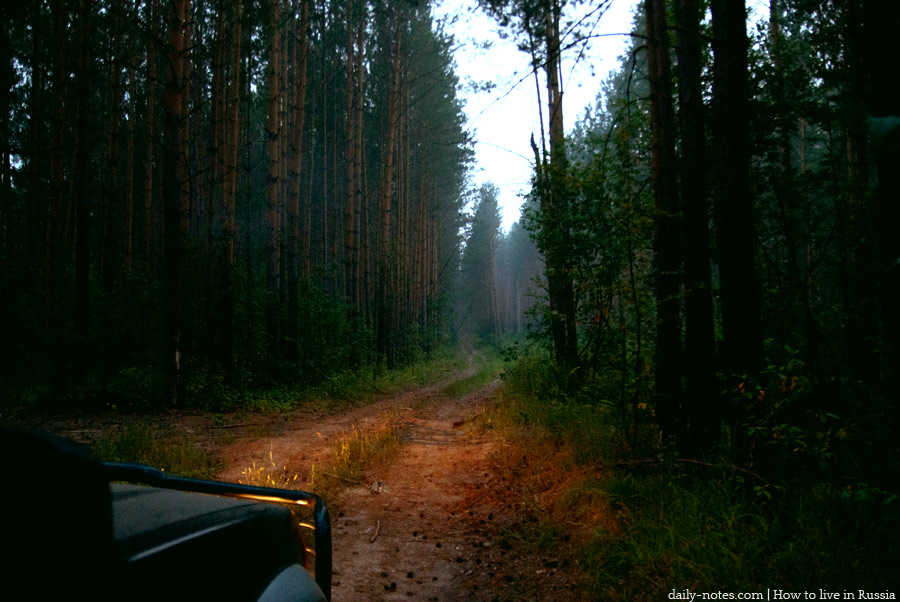 Road in a forest